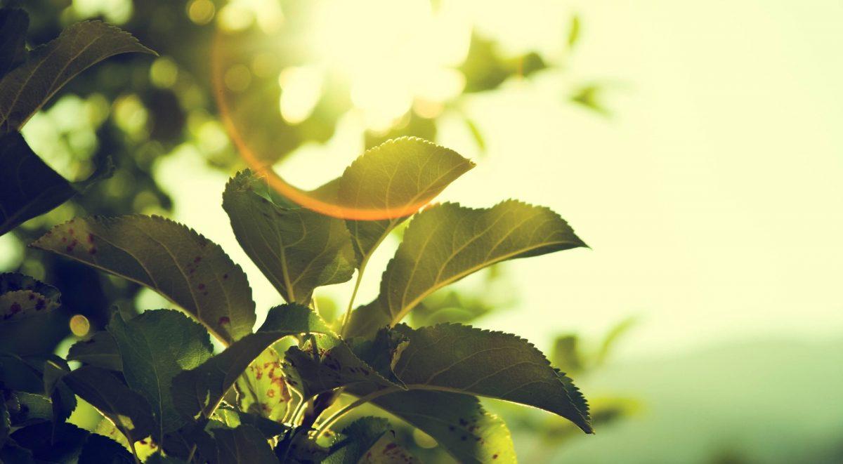 tree-919055_1920